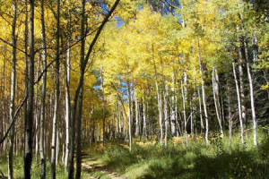 pagosa springs fall activities