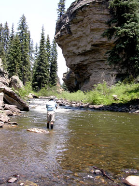 Colorado  Fishing on Pagosa Springs Colorado Fly Fishing